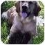 Photo 1 - Golden Retriever Mix Dog for adoption in Owatonna, Minnesota - Graham