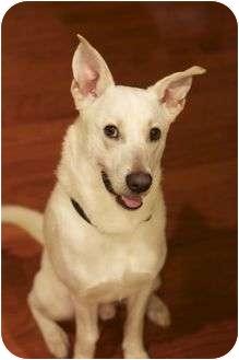 German Shepherd Dog Mix Dog for adoption in Harrisonburg, Virginia - Alfie