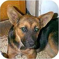 Adopt A Pet :: Houston - dewey, AZ