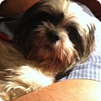 Adopt A Pet :: Theodore - Shirley, NY