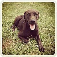Adopt A Pet :: Thief - Orlando, FL