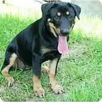 Adopt A Pet :: Cubby - Kingwood, TX