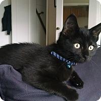 Adopt A Pet :: Coraline - Chicago, IL