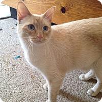 Adopt A Pet :: Crosby - St. Louis, MO