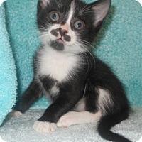 Adopt A Pet :: Sue - Reston, VA
