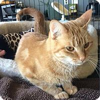 Adopt A Pet :: Sharla - Edmonton, AB
