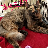 Adopt A Pet :: Jazzy - McDonough, GA