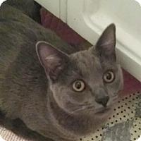 Adopt A Pet :: Winona - North Highlands, CA