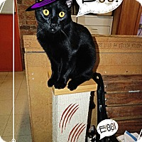 Adopt A Pet :: Cruella - Converse, TX