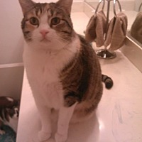 Adopt A Pet :: Tigra - Los Angeles, CA