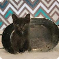Adopt A Pet :: Bert Warehouse - Mission, KS