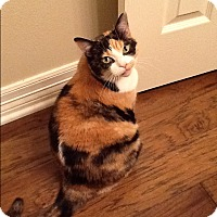 Adopt A Pet :: Cali - Kennedale, TX