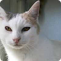 Adopt A Pet :: Missy - Republic, WA