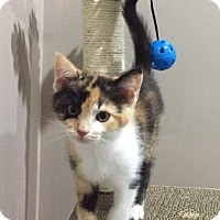 Adopt A Pet :: Winky Dink - Libertyville, IL