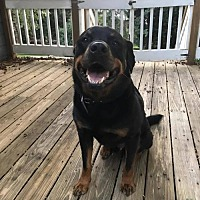 Adopt A Pet :: Kacy - White Hall, AR