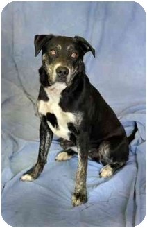 Labrador Retriever Mix Dog for adoption in Cannelton, Indiana - Brody