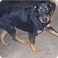 Adopt A Pet :: Kaz - Chandler, IN