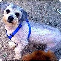 Adopt A Pet :: BUDDY - dewey, AZ
