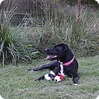 Adopt A Pet :: Odessa - Bakersville, NC