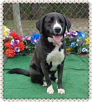 Labrador Retriever Mix Dog for adoption in Marietta, Georgia - GEORGIA