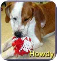 Hound (Unknown Type) Mix Dog for adoption in Aldie, Virginia - Howdy