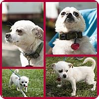 Adopt A Pet :: wally - hollywood, FL