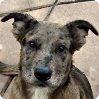 Adopt A Pet :: Baby Finn - Oakley, CA