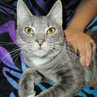 Adopt A Pet :: Marla - Floral City, FL