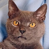 Adopt A Pet :: Smokey - Renfrew, PA