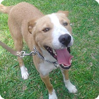 Adopt A Pet :: Chase-ADOPTED - Somerset, KY