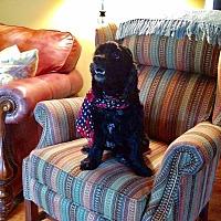 Adopt A Pet :: Francis 7yr - Mentor, OH