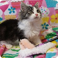 Adopt A Pet :: Junebug - Berlin, CT