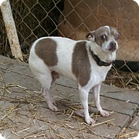 Adopt A Pet :: HENRY - Anderson, SC