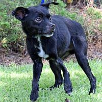 Adopt A Pet :: Eli - Mount Pleasant, SC