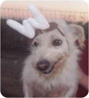 Fox Terrier (Wirehaired)/Terrier (Unknown Type, Small) Mix Dog for adoption in Sacramento, California - Dover