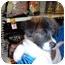 Photo 1 - Border Collie/Labrador Retriever Mix Puppy for adoption in No.Charleston, South Carolina - Piper