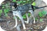 Terrier (Unknown Type, Small) Mix Dog for adoption in Summerville, South Carolina - Tyna