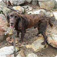 Adopt A Pet :: Sporty - San Diego, CA