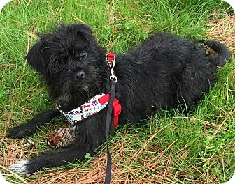Terrier (Unknown Type, Medium)/Terrier (Unknown Type, Small) Mix Puppy for adoption in Hampton, Virginia - Lei