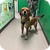 Adopt A Pet :: Billy Boy- URGENT - Providence, RI