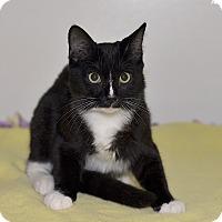 Adopt A Pet :: Comet - Medina, OH