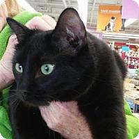 Adopt A Pet :: Bob - St. Charles, MO