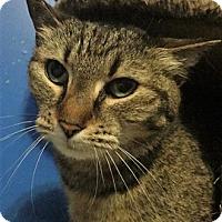 Adopt A Pet :: Atheena - Vancouver, BC