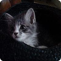 Adopt A Pet :: Parker - Salamanca, NY