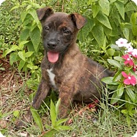 Adopt A Pet :: Mason - Tyler, TX