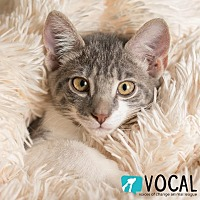 Adopt A Pet :: Oodle - Ocala, FL