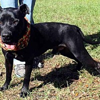 Adopt A Pet :: CAMERON - Sanford, FL