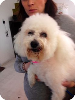 Poodle (Miniature) Mix Dog for adoption in Thousand Oaks, California - Maya