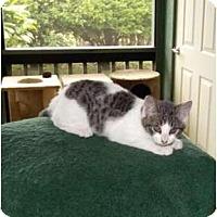 Adopt A Pet :: Marissa - Makawao, HI