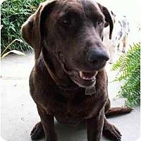 Adopt A Pet :: Coco - Cumming, GA